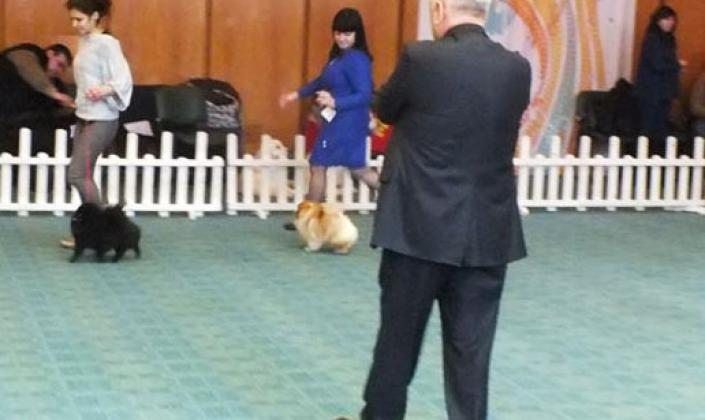 Erik on the dog show-March 2014